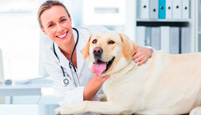Veterinary Diagnostics